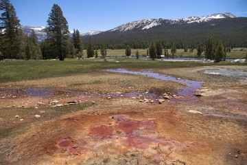 The amazing colours of Soda Springs, Yosemite National Park