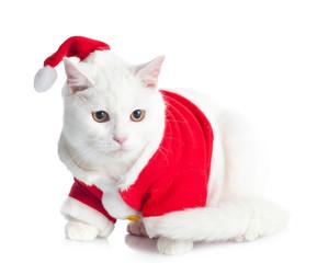 Gatto di Natale