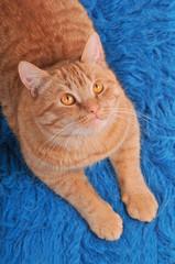 Cat on Woolen Carpet