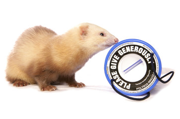 Ferret charity donations
