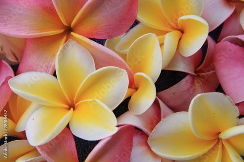 Obraz na Szkle Blume