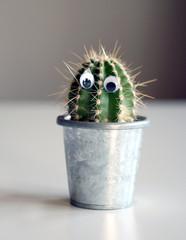 Mister Kaktus