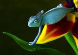 Fototapete Exotisch - Einfachheit - Reptilien / Amphibien