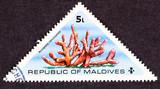 Maldives Stamp Branching Acropora Cervicornis Staghorn Coral poster