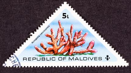 Maldives Stamp Branching Acropora Cervicornis Staghorn Coral