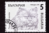 Bulgarian Postage Stamp Fuzzy Longhaired Persian Cat Breed poster