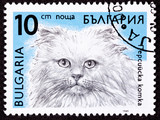 Bulgarian Postage Stamp Fuzzy Longhaired Himalayan Cat Breed poster