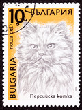 Bulgarian Postage Stamp Fuzzy Long haired Persian Cat Breed poster