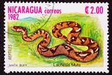 Postage Stamp Bushmaster Snake Venomous Pit Viper Lachesis Muta poster
