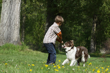 enfant jouant avec son chien - boy playing with her dog