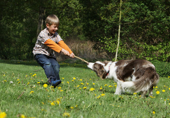 enfant et chien se disputant un bâton - boy and dog