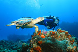 Hawksbill Turtle and Diver