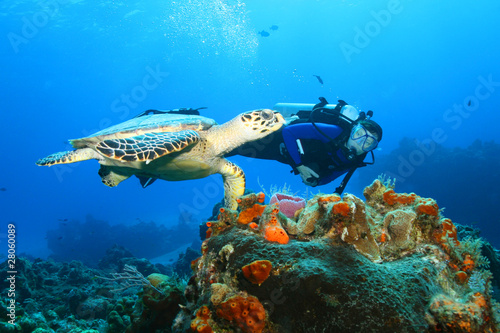 Hawksbill Turtle and Diver - 28060089