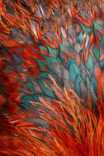 Groupe de plumes marron brillant d'un oiseau