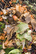 Kitchen waste on a compost heap