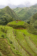 Rice paddy terrace