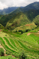 Rice Terrace Landscape