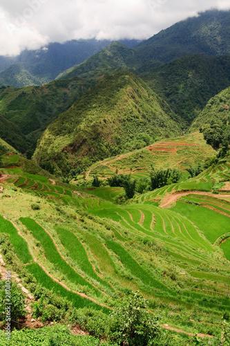 Rice Terrace Landscape