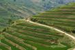 Sapa highlands trail