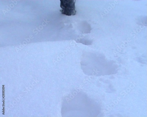Steps on snow