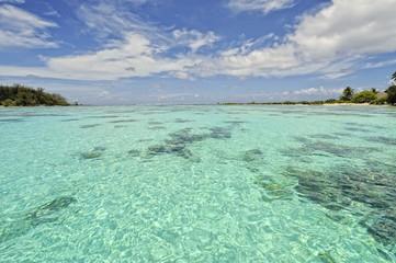 Amazing crystalline water, Moorea, French Polynesia
