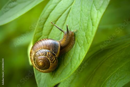 Snail - 28086244