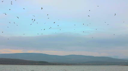 Large flock in the sky