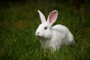 white rabbit on grass outdoor