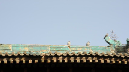 pigeon on the eaves of temple china