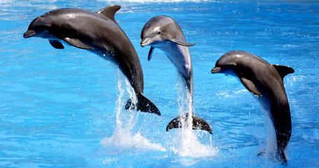 delfin en acrobacia