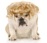 miserable dog poster