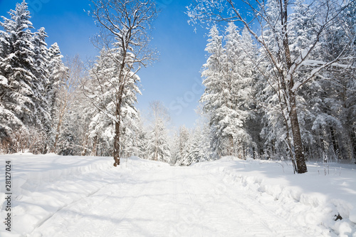 winter landscape of lane to forest - 28127024
