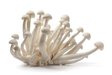 Fresh white edible Shimeji mushrooms