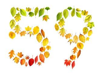 foliage 59