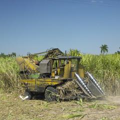 sugar cane harvest, Sancti Spíritus Province, Cuba
