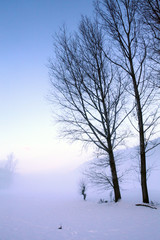 alberi in paesaggio invernale con nebbia