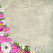 Pink and white flowers over  grunge canvas texture