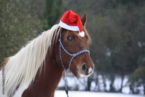 Poney de Noel