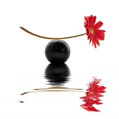 Fleur rouge, équilibre zen