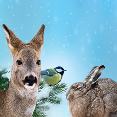 wild animal at winter time - christmas card
