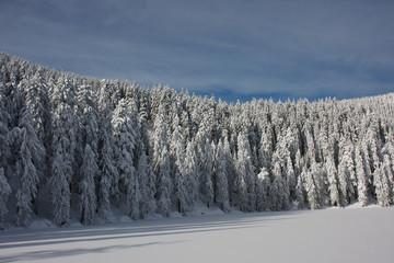 Winterwald #2