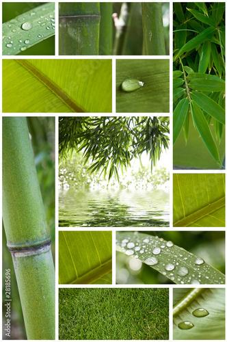 Papiers peints Bambou composiion nature