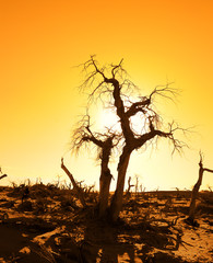 death tree against sunlight over sky background in sunset .