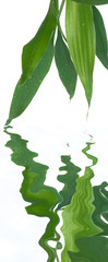 reflets de bambou bonheur