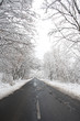 winter landscape. Winter road and trees covered with snow