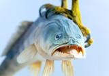 fish in talon bird of prey poster