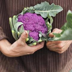 préparation manuelle d'un chou fleur violet