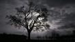 Moonlight Timelapse