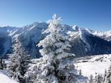 Fototapety Weihnachtsbaum in den Alpen