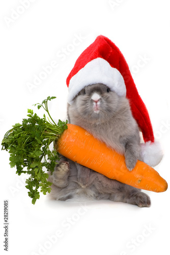 Bunny in the red santa claus hat with carrot